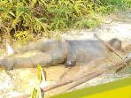 mayat_pria_di_kebun_sawit_dekat_kantor_walikota_pekanbaru_diduga_korban_pembunuhan_2.jpg