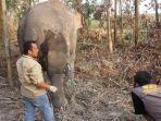 mengobati-satu-ekor-gajah-sakit-di-kilometer-51.jpg