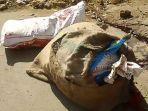 mutilasi-mayat-dalam-karung-di-india_20180201_123420.jpg
