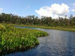 panorama-hutan-di-sekitar-tasik-nambus-kecamatan-tebingtinggi-barat-kepulauan-meranti_20170820_182142.jpg