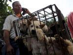 pedagang-anak-anjing-di-kota-yulin-china-untuk-dijual-dalam-festival-daging-anjing.jpg