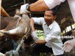 pemeriksaan-kesehatan-hewan-kurban-di-pekanbaru-2.jpg