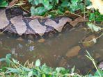 penampakan-ular-sanca.jpg