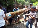 penanganan-harimau-di-kebun-binatang-bonbin-yang-lepas-dari-kandang-rabu-5122018.jpg
