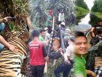 pengakuan-petugas-pengevakuasi-harimau-sumatera-yang-terjerat-di-konsesi-hti-pt-rapp-ada-penembak.jpg