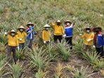 pertanian-nanas-lahan-gambut-binaan-pertamina-tingkatkan-ekonomi-masyarakat.jpg