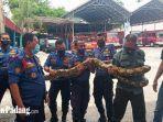 petugas-damkar-padang-saat-mengevakuasi-ular-sanca-batik.jpg