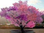 pohon-buah-beda-san-van-aken_20180630_090754.jpg