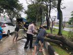 pohon-tumbang-akibat-hujan-deras-di-pekanbaru.jpg