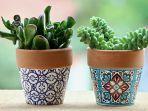 pot-bunga-tanaman-hias-tanaman-di-dalam-pot.jpg