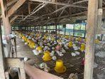 program_best4life_kemudahan_layanan_pln_pekanbaru_untuk_pelaku_usaha_sektor_agrikultur1.jpg