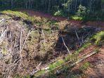 sisa-aktifitas-penebangan-kayu-pohon-di-kawasan-hutan-desa-pemandang.jpg