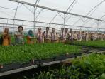 siswa-siswi-sman-1-pekanbaru-saat-mengunjungi-kerinci-central-nursery.jpg