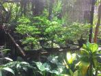 tanaman-hias-jenis-bonsai_20150520_183543.jpg