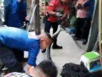 tim-rescue-dinas-pemadam-kebakaran-kota-pekanbaru-melakukan-evakuasi-ular.jpg