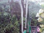 ular-raksasa-yang-ditemukan-di-pulau-kalimantan_20170411_191805.jpg