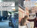 viral_pemuda_cari_kucing_liar_ke_turkijpg.jpg