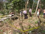 warga-pelalawan-tewas-ditimpa-pohon-karet.jpg