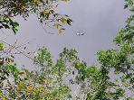 water-bombing-bengkalis-karhutla.jpg