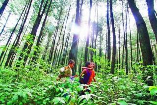 Jeda Tebang Hutan Akhirnya Diberlakukan