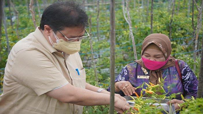 Menko Airlangga juga ikut memanen hasil pertanian berupa cabai tumpang sari dan melon dengan para petani tergabung dalam Kelompok Tani Ngudi Rahayu dari Kelurahan Syamsudin Noor, Kecamatan Landasan Ulin, Kota Banjarbaru dalam rangkaian kunjungannya di Provinsi Kalimantan Selatan, Jumat 20 Agustus 2021.