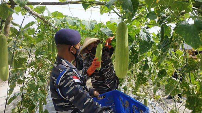 Kunker Danlantamal XII Pontianak, Bupati Ketapang Minta Dukungan Pembangunan Kawasan Food Estate