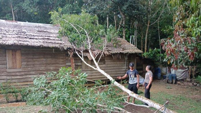 Polsek Meranti Bersama Pemuda Gotong Royong Bersihkan Rumah Warga Tertimpa Pohon