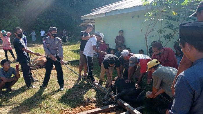 Personel Polsek Badau Bantu Proses Pemotongan Hewan Kurban di Masjid