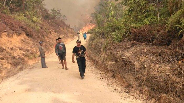 Puluhan Hektare Lahan Pertanian dan Perkebunan di Kabupaten Melawi Hangus Terbakar