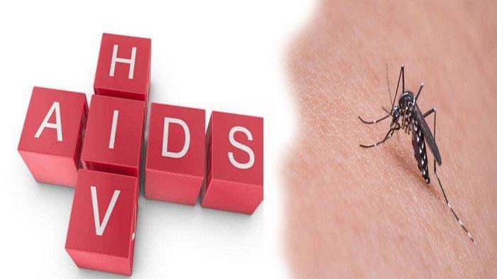 Bisakah Nyamuk Tularkan HIV AIDS Dari Penderita ke Orang Sehat? Peneliti Bongkar Fakta Mengejutkan