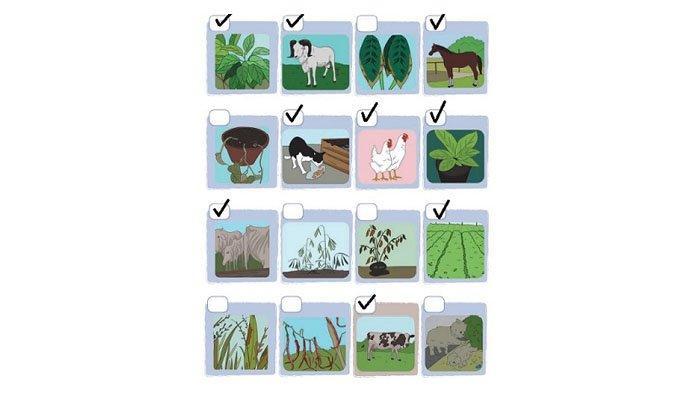 Berilah tanda centang (V) pada gambar yang menunjukkan tanaman dan hewan yang terawat.
