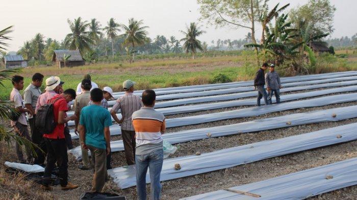 Bangga dengan Gegertani, Musyafak: Banyak Petani Millenial Garap Pertanian