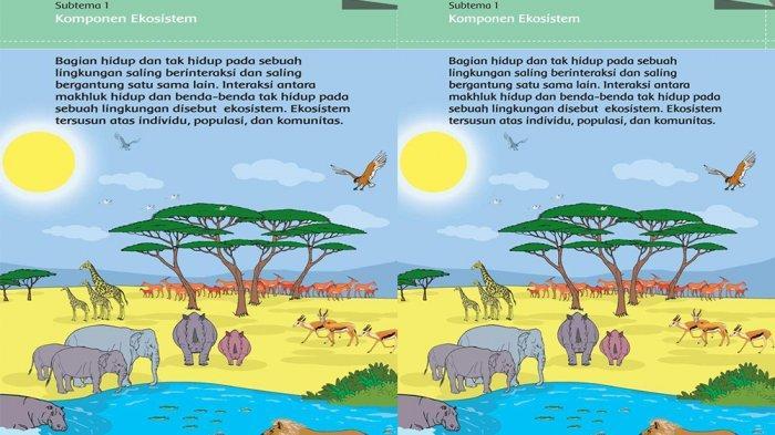 Kunci Jawaban Tema 5 Kelas 5 Halaman 13 15 16 17 Tema Sd Subtema 1 Pembelajaran 2 Komponen Ekosistem Halaman All Tribun Pontianak