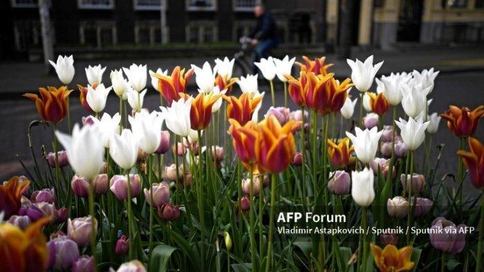 6 Fakta Menarik Bunga Tulip, Diantaranya Bisa Dimakan dan Pernah Jadi Bunga Termahal Dunia