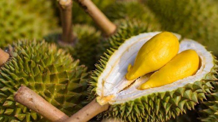 Cara Memilih Durian Legit Dijamin Banyak Daging dan Rasanya Manis
