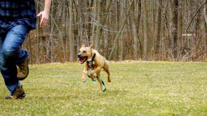 Cara Mudah Mengusir Anjing yang Ingin Menggigit dan Tiba-tiba Menyerang Kita
