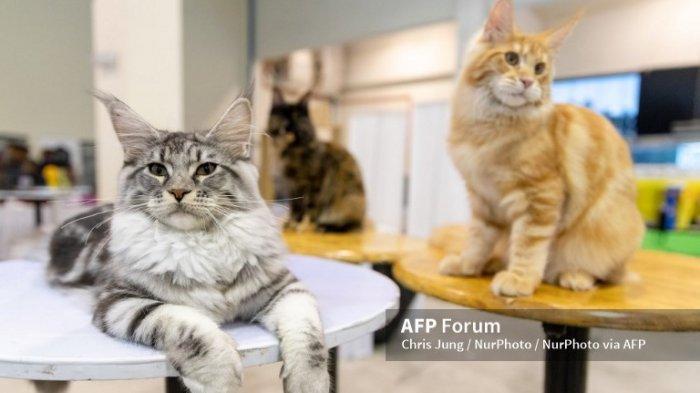 Cara Paling Ampuh Mencegah Kucing Kabur atau Hilang dari Rumah