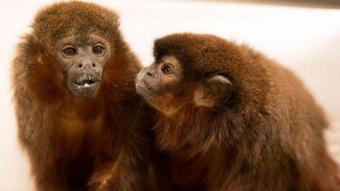 Daftar Hewan Paling Setia di Dunia - Hanya Punya Satu Pasangan Seumur Hidup