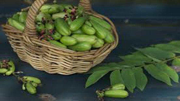 Jenis Tumbuhan yang Mampu Redam Diabetes Lengkap Cara Meramu Jadi Obat Herbal Diabetes