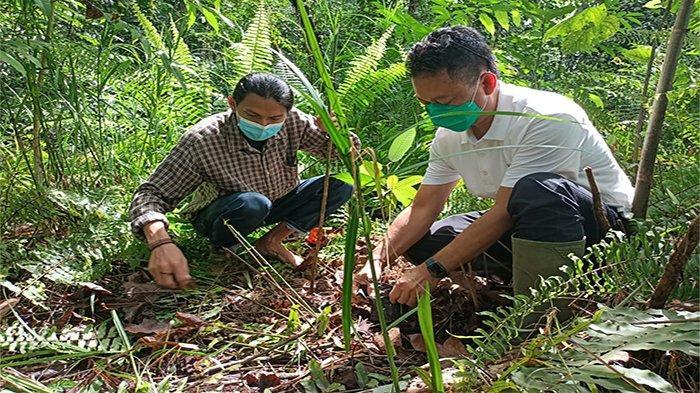 Tetap Produktif di Tengah Pandemi, Wali Kota Pontianak Edi Kamtono Ajak Warga Tanam Pohon