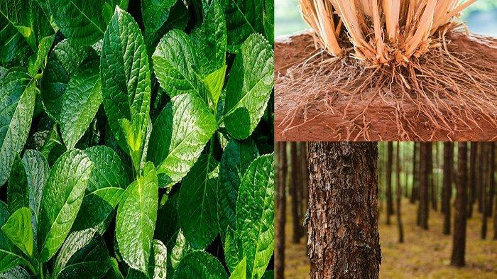Fungsi Daun Batang Bunga Akar Biji & Fungsi Buah Pada Tumbuhan