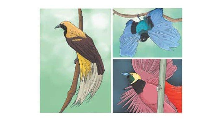 Gambar burung cendrawasih.