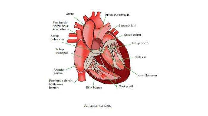 Kenali Bahaya GERD Terhadap Jantung dan Dampak Buruk Pada Organ Vital Lainnya