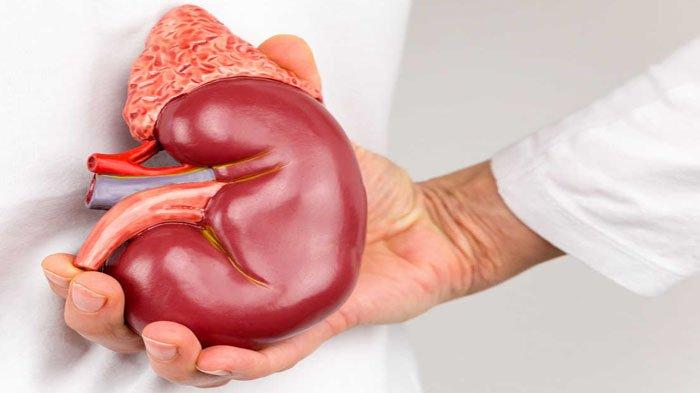 Wajib Baca, Ini 5 Fakta yang Perlu Anda Tahu Seputar Penyakit Ginjal! Ngeri