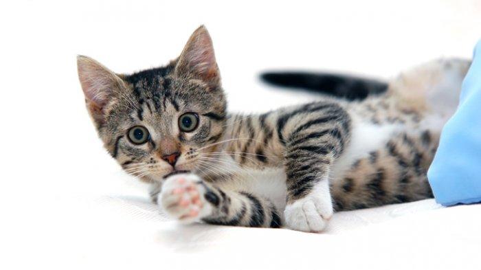 CARA Buat KTP Kucing Online atau Hewan Kesayangan Lain, Caranya Mudah Siapkan Foto Lucu Dulu
