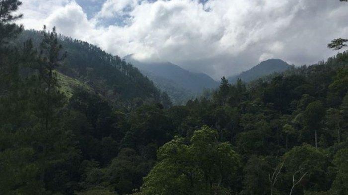 HOROR di Hutan Sambas Kalbar, Kisah Deki 5 Hari Berjuang Keluar dari Hutan! Temukan Pondok Misterius