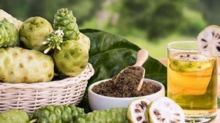 Khasiat Mengkudu untuk Kesehatan ! Cek Manfaat Mengkudu untuk Asam Urat , Kolesterol & Penyakit Lain