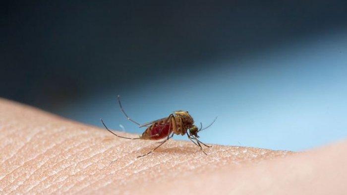 Cara Menghilangkan Gatal Digigit Nyamuk Bisa Pakai 5 Bahan Alami yang Ada di Rumah