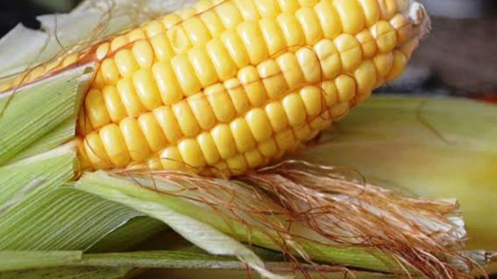 JAGUNG Buah atau Sayur ? Ini Kandungan Jagung dan Manfaat Jagung untuk Kesehatan