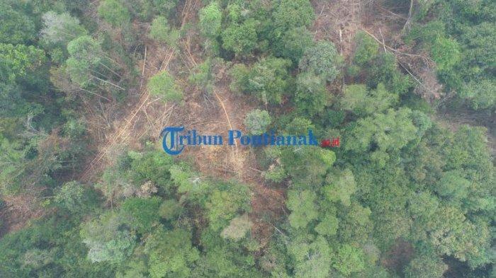 FOTO DRONE: Jalur Menuju Hutan untuk Mengambil Kayu Diduga Ilegal Logging di Teluk Bakung Kubu Raya - jalur-menuju-hutan-untuk-mengambil-kayu-ilegal-logging-di-desa-teluk-bakung-3.jpg